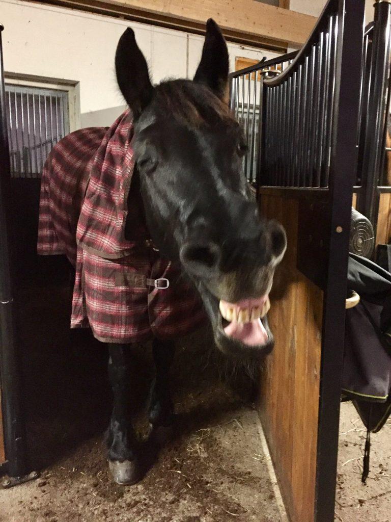 Hevosen Ripuli